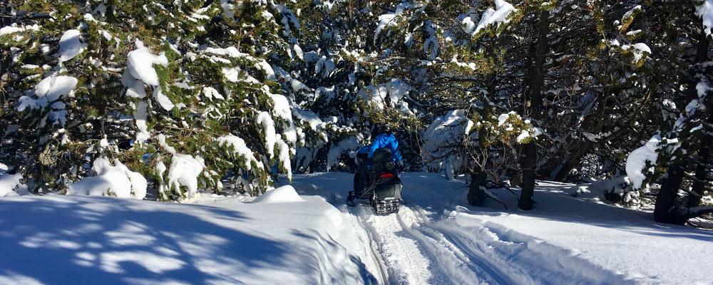 Team on snowmobiles through forest