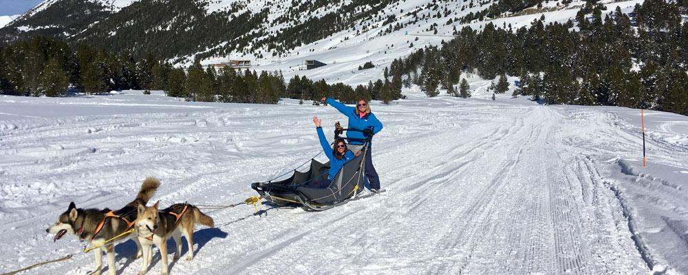 Team on sled