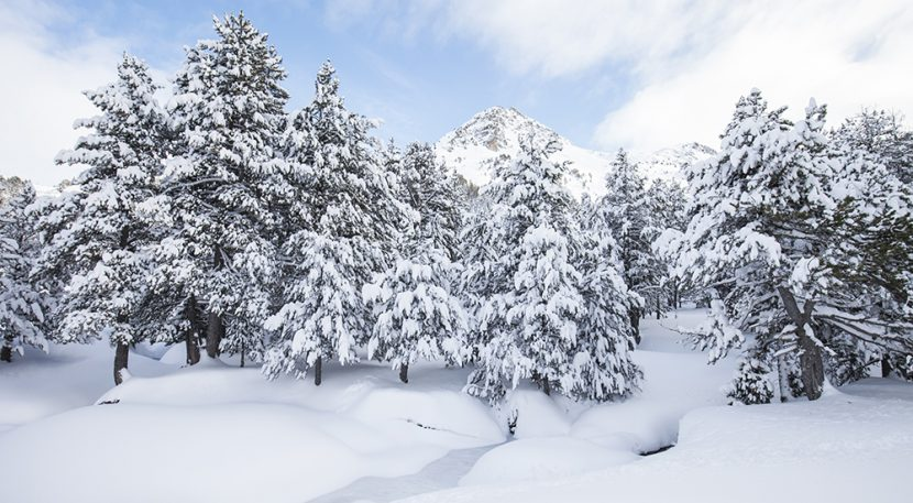 Snow trees, perfect winter scene